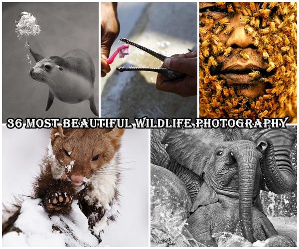 36 Most Beautiful Wildlife Photography