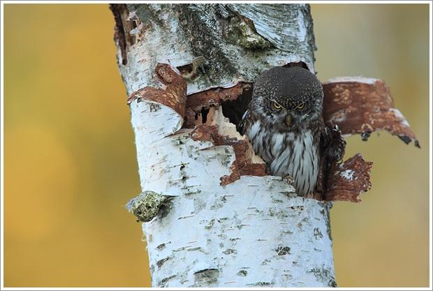 Beautiful Wild Life Photograpphy (11)