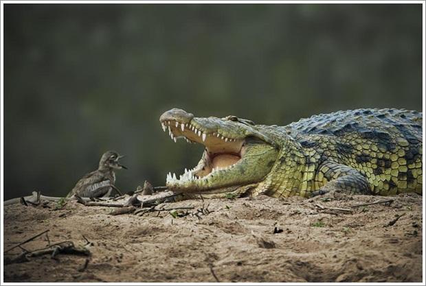 Beautiful Wild Life Photograpphy (12)