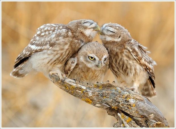 Beautiful Wild Life Photograpphy (15)