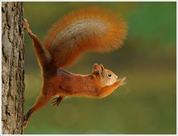 Beautiful Wild Life Photograpphy (17)
