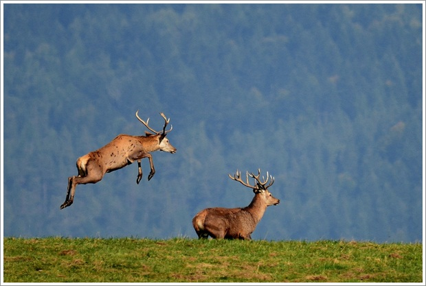 Beautiful Wild Life Photograpphy (19)