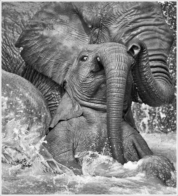 Beautiful Wild Life Photograpphy (25)