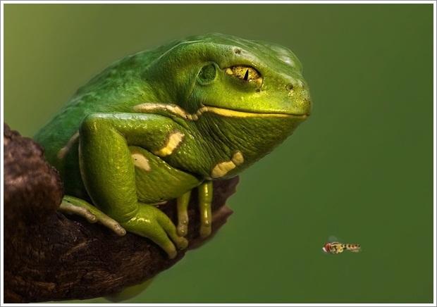 Beautiful Wild Life Photograpphy (26)
