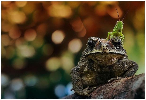 Beautiful Wild Life Photograpphy (27)