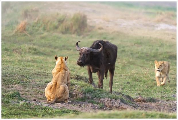 Beautiful Wild Life Photograpphy (5)